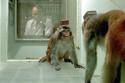 Психологические эксперименты на животных